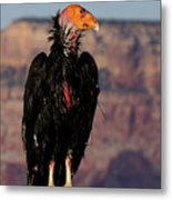 Surveying The Canyon Metal Print