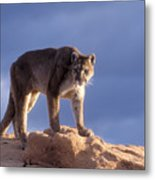 Surveying The Territory Metal Print