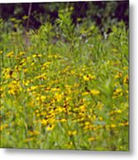 Susans In A Green Field Metal Print