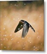 Swallow In Rain Metal Print