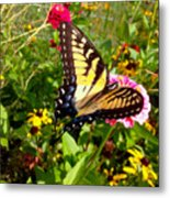 Swallow Tail Butterfly Enjoying The Sunshine Metal Print