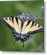 Swallowtail 20120723_24a Metal Print