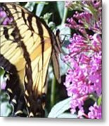 Swallowtail Metal Print by Anna Villarreal Garbis