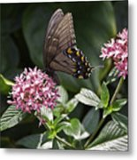 Swallowtail Buterfly Metal Print