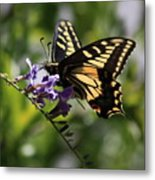 Swallowtail Butterfly 1 Metal Print