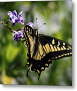 Swallowtail Butterfly 2 Metal Print