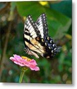 Swallowtail Butterfly 3 Metal Print