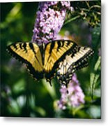 Swallowtail Butterfly At The Maryland Zoo Metal Print