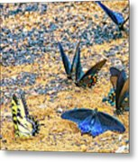 Swallowtail Butterfly Convention Metal Print