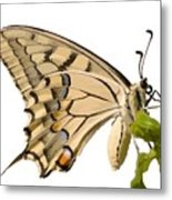 Swallowtail Butterfly Vector Isolated Metal Print