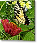 Swallowtail On A Zennia Metal Print
