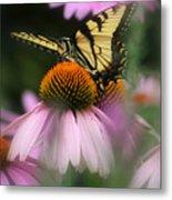 Swallowtail On Coneflower Metal Print