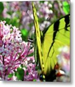Swallowtail On Korean Lilac Florals Metal Print
