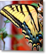 Swallowtail Wing Metal Print