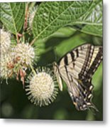 Swallowtail With Flowers Metal Print