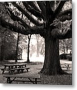 Swamp Chestnut Oak Tree-rosedale Plantation Metal Print