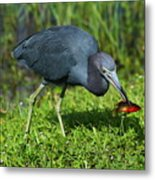 Swamp Hunter Metal Print