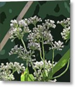 Swamp Milkweed Abstract Metal Print