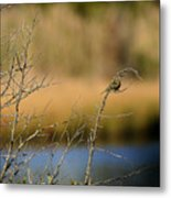 Swamp Sparrow Metal Print