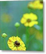 Swamp Sunflower Metal Print