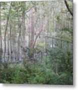 Photo Of Swamp Metal Print