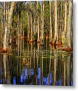 Swamp Trees Metal Print