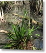 Swamp Vegetation Metal Print