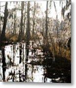 Swamps Of Louisiana 5 Metal Print