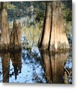 Swampy Knees Metal Print
