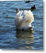 Swan 001 Metal Print