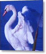Swan At Cape May Point State Park  Metal Print