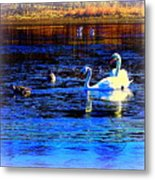 When It Seems Like The Swans Are Ruling The Sea  Metal Print by Hilde Widerberg