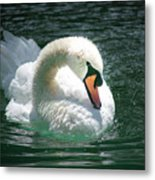 Swan Bow Metal Print