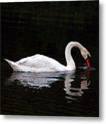 Swan Drinking Metal Print