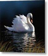 Swan Elegance Metal Print