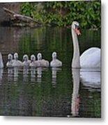 Swan Family Portrait Metal Print