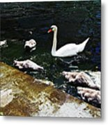 Swan Feather Metal Print