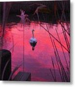 Swan In A Sunset Metal Print