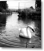Swan In Black And White Metal Print
