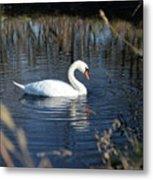 Swan In Blue Pond Metal Print