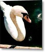 Swan In Pond Metal Print