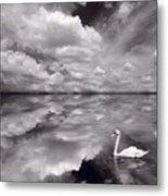 Swan Lake Explorations B W Metal Print