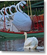 Swan Meeting Up With Some Friends Metal Print