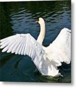 Swan Moment Metal Print