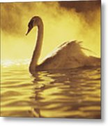 Swan On Gold Metal Print
