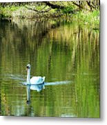 Swan On The Cong River Cong Ireland Metal Print