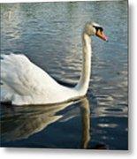 Swan On The Run Metal Print