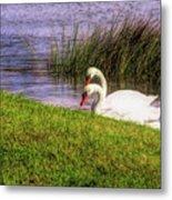 Swan Pair Warm Color Metal Print