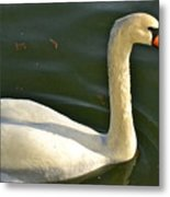 Swan Up Close Metal Print