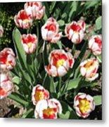 Swanhurst Tulips Metal Print